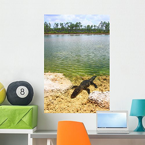 Everglade Alligator (Florida Everglades American Alligator Wall Mural by Wallmonkeys Peel and Stick Graphic (36 in H x 24 in W) WM360627)