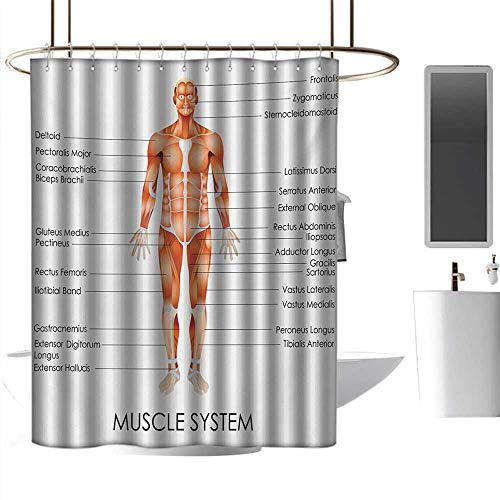 coolteey Shower Curtains That tie Back Human Anatomy,Muscle System Diagram of Man Body Features Biological Elements Medical Heath Image,Coral,W72 x L96,Shower Curtain for Shower stall (Diagram Of The Back Of The Human Body)