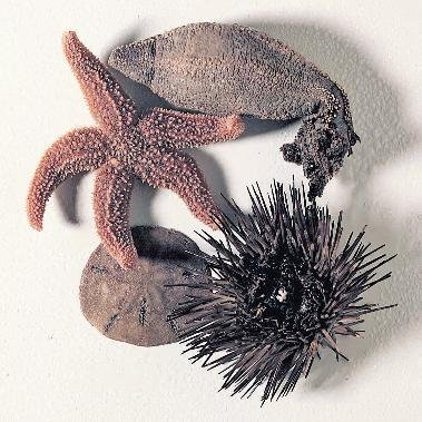 470001-132 - WARDâS Echinoderm Collection, Preserved - Ward'sâ Echinoderm Collection - Kit of 1