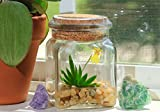 Maintenance Free Orchid. Live Plant Terrarium, Watering free, Miniature Garden. No Green Thumb Needed, Great Gift!
