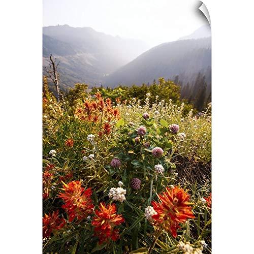 (CANVAS ON DEMAND Scarlet Paintbrush and Wildflowers, Mount Rainier National Park, Washington Wall Peel Art Print.)