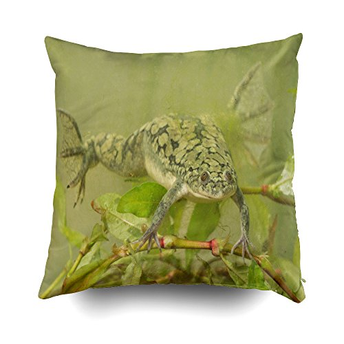 GROOTEY Decorative Cotton Square Pillow Case Covers with Zippered Closing for Home Sofa Decor Size 20X20 Inch Costom Pillowcse Throw Cover Cushio African Clawed Frog These Frogs are ()