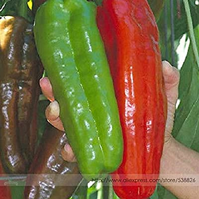 100% True Giant 100 Pepper Seeds Giant Marconi Hybrid Sweet Pepper, DIY Home Garden Vegetable Plant