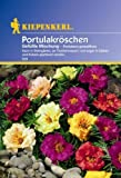 Portulaca grandiflora Portulakröschen gefüllte Mischung