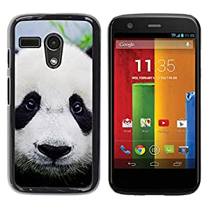 Stuss Case / Funda Carcasa protectora - Panda Cute Japanese Eyes Sad Furry Plush - Motorola Moto G 1 1ST Gen I X1032