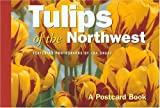 Tulips of the Northwest: A Postcard Book (Postcard Books)