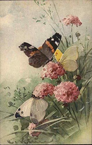 Butterflies Other Animals Original Vintage Postcard from CardCow Vintage Postcards