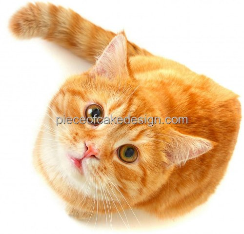 Orange Cream Cat - 8