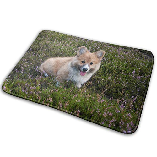 - Ziemxjdska Welsh Corgi Dog Pet Relax Family Doormats Entrance Mat Floor Mat Door Mat Rug Indoor/Outdoor/Front Door/Bathroom Mats Rubber Non Slip (16x24 Inch)