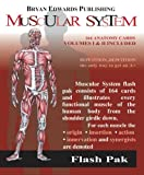The Muscular System (Flash Paks/Volumes 1 and 2) 2nd Edition