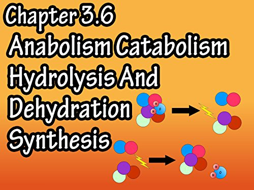 Chapter 3.6 Anabolism Catabolism Hydrolysis And Dehydration Synthesis (The Best E Liquid Concentrates)