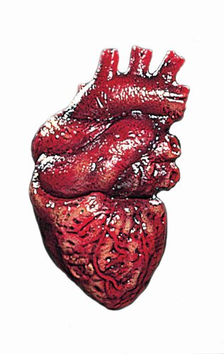 Simulated Body Parts ~ Heart 1/Pkg, Pkg/1