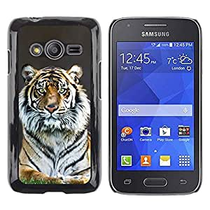 Stuss Case / Funda Carcasa protectora - Tiger Stripes Fur Grey Nature Animal Zoo - Samsung Galaxy Ace 4 G313 SM-G313F