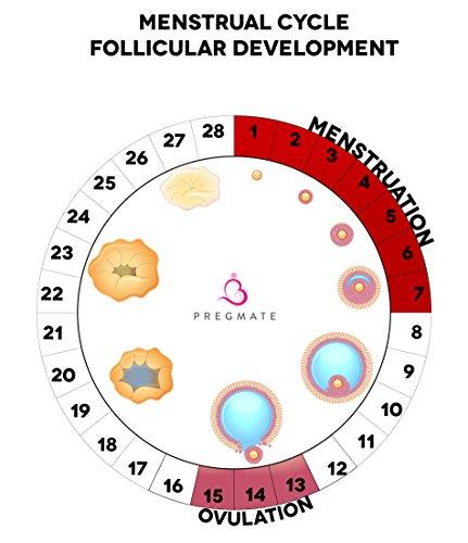 PREGMATE 50 Ovulation Test Strips LH Surge Predictor OPK Kit (50 LH) by PREGMATE (Image #8)