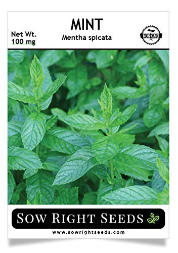 Sow Right Seeds - Mint Seed for Planting - Non-GMO Heirloom Seeds - Full Packet Instructions for Planting an Herbal Tea Garden, Indoors or Outdoor; Great Gardening Gift (1 Packet).