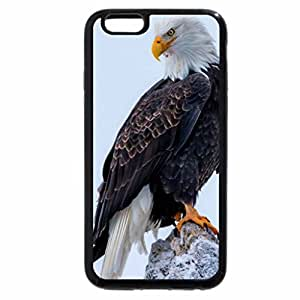 iPhone 6S / iPhone 6 Case (Black) bold eagle