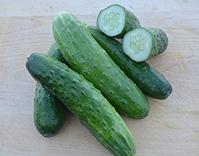 Cucumber Seeds- Straight Eight Heirloom- 100+ Seeds