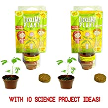 TickleMe Plant Party Favors(2) or Christmas Stocking Stuffer - LEAVES FOLD TOGETHER WHEN YOU TICKLE IT! Minutes later the Leaves Re-open! Great science Fun, Green and Educational.Easy to Grow indoors!