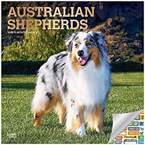Australian Shepherds Calendar 2020 Set - Deluxe 2020 Australian Shepherds Wall Calendar with Over 100 Calendar Stickers (Ausssie Gifts, Office Supplies) 2