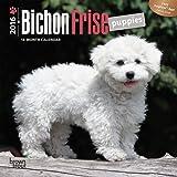 Bichon Frise Puppies 2016 Mini 7x7 (Multilingual Edition)