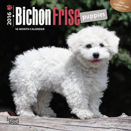 Download Bichon Frise Puppies - 2016 Mini Wall Calendar 7 x 7in PDF