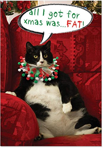 12 'Got Fat' Boxed Christmas Cards with Envelopes (4.75 x 6.625 Inch), Funny Fat Cat Christmas Notes, Silly Large Feline Holiday Notes, Big Chubby Kitty Cat Holiday Cards B1939