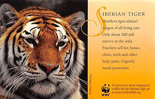 Misc Animals Siberian Tiger Washington DC, USA Unused