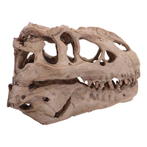 Dovewill 16cm Dinosaur Tyrannosaurus Rex Skull Resin Model Collectibles Aquarium Ornament Home Decor