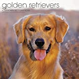 Golden Retrievers Wall Calendar (2017)