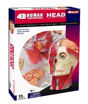 Learn about Human Anatomy - Head with 14 detachable parts & stand (Age 8+) by (4d Anatomy Eyeball Model)