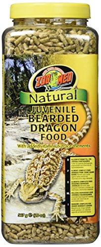 Natural Bearded Dragon - 3