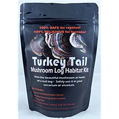 Forest Organics Turkey Tail Mushroom Growing Kit For Terrariums Medicinal Tea Gorws For Years!! : Garden & Outdoor