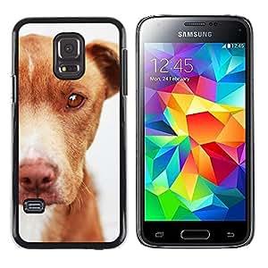 TopCaseStore / la caja del caucho duro de la cubierta de protección de la piel - Mutt Mongrel Dog Brown Canine - Samsung Galaxy S5 Mini, SM-G800, NOT S5 REGULAR!
