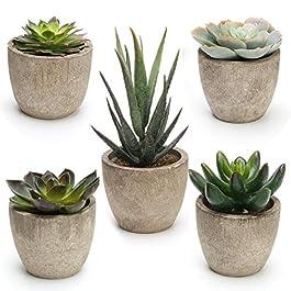 Coitak Artificial Succulent Plants Potted, Assorted Decorative Faux Succulent Potted Fake Cactus Cacti Plants with Pots, Set of 5