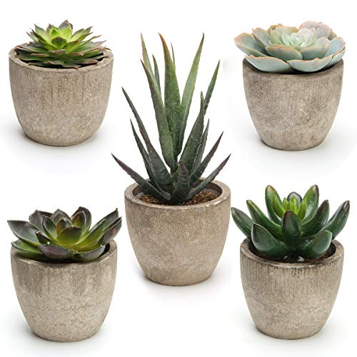 Coitak Artificial Succulent Plants Potted, Assorted Decorative Faux Succulent Potted Fake Cactus Cacti Plants with Pots, Set of 5
