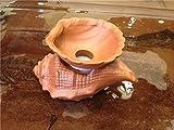 China Gongfu Tea Ceramic Small Tea Funnel (Conch/red)