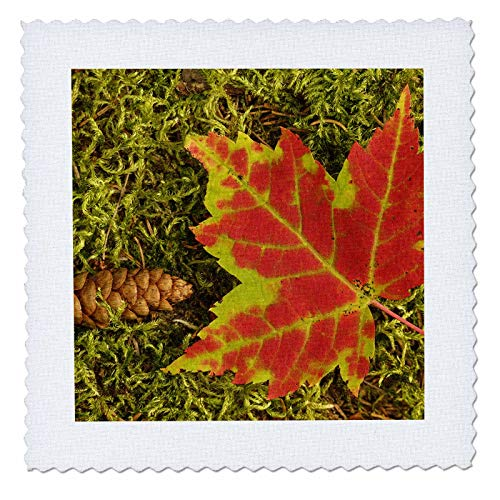 3dRose Danita Delimont - Autumn - Close-up of maple leaf and pine cone on moss. - 22x22 inch quilt square (qs_314854_9) ()