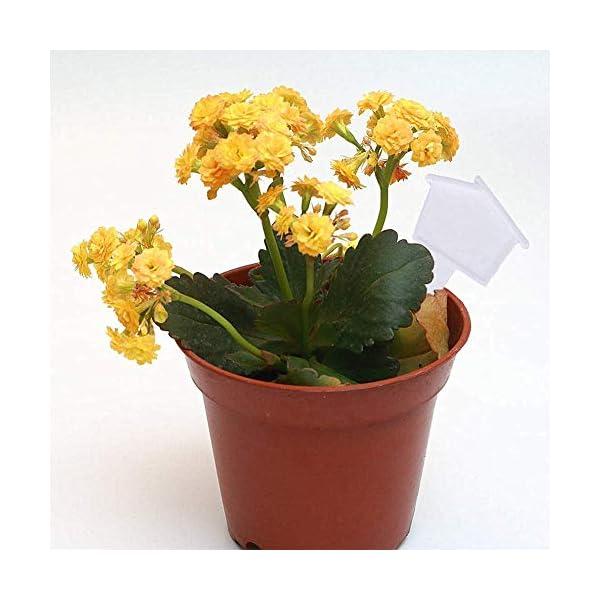 Etichette vegetali per Piante da Esterno Tag Giardino Etichette vegetali Impermeabili Etichette per Piante in Vaso… 3 spesavip