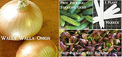 Sweet Walla Walla Onion Seeds 420 Seeds Upc 646263361269 + 1 Plant Markers Roasting Pepper