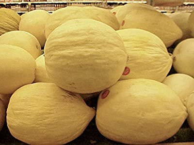 Cantaloupe Melon Crenshaw Seeds Great Heirloom Vegetable