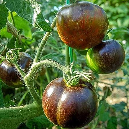 AGROBITS TomatoCoic Eclie - Chupete para Tomates (orgánico, 20D ...