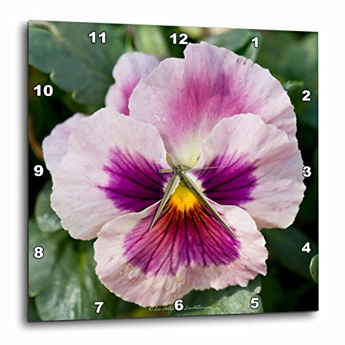3dRose Lee Hiller Photography Hot Springs National Park Flowers - Pink Violet Pansy - 10x10 Wall Clock (dpp_14052_1) -