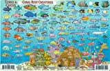 Turks & Caicos Dive Map & Reef Creatures Guide Franko Maps Laminated Fish Card