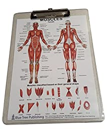 Muscle Anatomy for Female and Male Dry Erase Clipboard two sided (Muscle)
