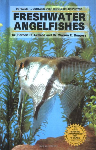 - Freshwater Angel Fishes