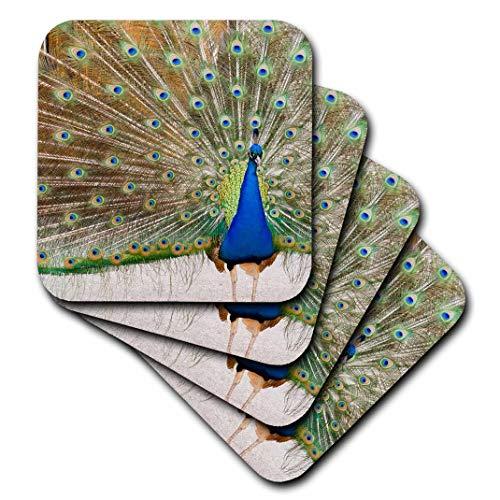 3dRose CST_95813_3 Peacock, Chateau Ste. Michelle Winery, Washington-Us48 Jmi0068-Janis Miglavs-Ceramic Tile Coasters, Set of 4