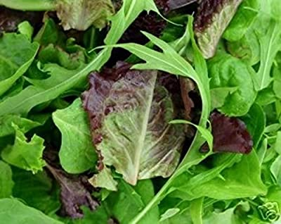 350 Organic Blend Seeds Gourmet Lettuce Unique Tasty Mix