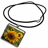 3dRose Danita Delimont - Sunflowers - Sunflower, Rio Grande Valley, McCook, Texas - US44 FZU0090 - Frank Zurey - Necklace With Rectangle Pendant (ncl_94458_1) offers