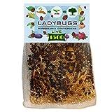 C & C 1500 Live Ladybugs for Garden - Bag of Live
