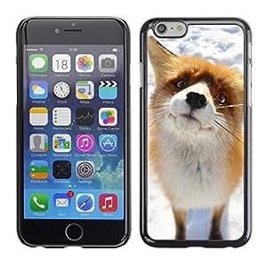 Caucho caso de Shell duro de la cubierta de accesorios de protección BY RAYDREAMMM - Apple iPhone 6 - Cute Arctic Snow Fox Orange Goofy Animal